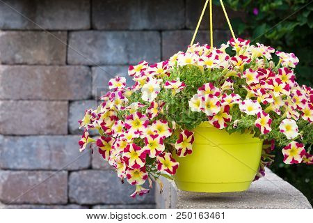 Colorful Yellow Pot Of Hanging Variegated Summer Petunias In Purple, White And Yellow On An Outdoor