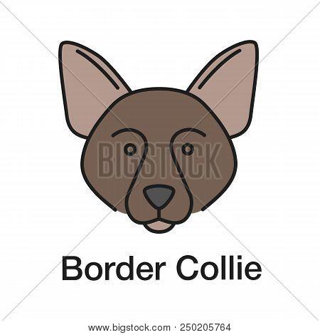 Border Collie Color Icon. Scottish Sheepdog. Isolated Vector Illustration