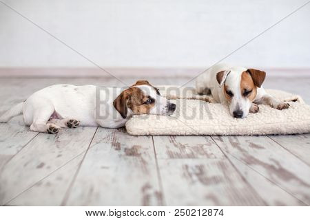 Two dogs sleeping on floor. Friends puppy and dog