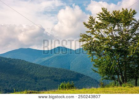 Tree On The Grassy Meadow In Mountains. Early Autumn Countryside With Beautiful Cloudscape. Lovely N