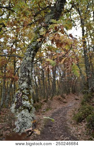 Old Path Between The Forest In Autumn