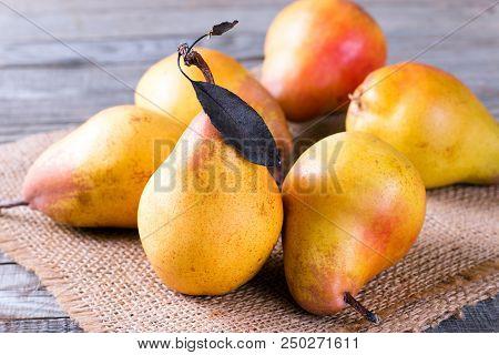 Pears. Pears Harvest. Fruit Background. Fresh Organic Pears On Old Sacking. Pear Autumn Harvest. Jui