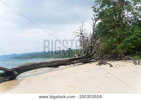 Uprooted Trees At Wandoor Beach As A Result Of 2004 Indian Ocean Tsunami, Port Blair, Andaman And Ni