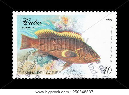 Cuba - Circa 1994 : Cancelled Postage Stamp Printed By Cuba, That Shows Yellow Edge Grouper.