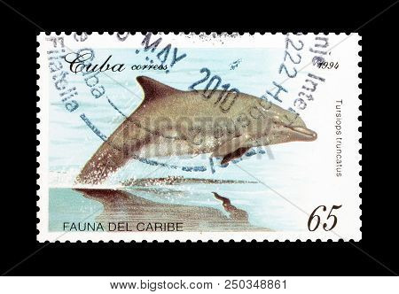 Cuba - Circa 1994 : Cancelled Postage Stamp Printed By Cuba, That Shows Common Bottle Nose Dolphin.
