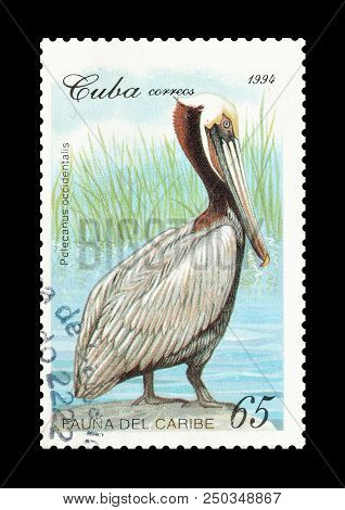 Cuba - Circa 1994 : Cancelled Postage Stamp Printed By Cuba, That Shows Brown Pelican.