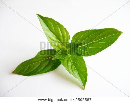 Spice Basil