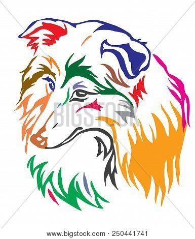 Colorful Decorative Portrait Of Dog Shetland Sheepdog ( Sheltie), Vector Illustration In Different C