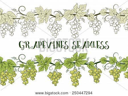 Horizontal Seamless Ornament, Grape Vines With Berries And Leaves, Color Green And Contour Pictogram