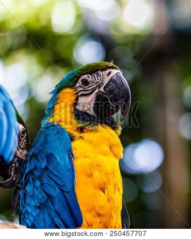 Blue And Yellow Macaw In A Natural Park In Cartagena, Colombia