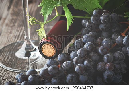 Red Wine Grapes Basket/ Dark Grapes/ Blue Grapes/ Wine Grapes/ Red Wine Bottle