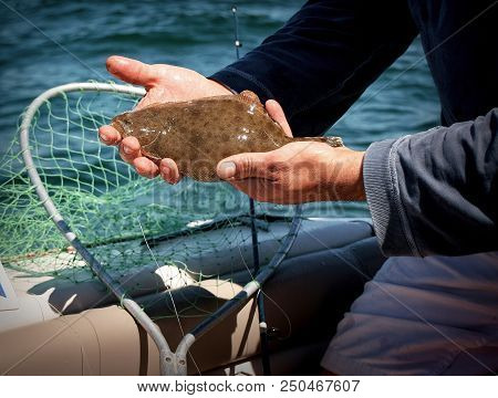 Baby Fluke Caught On Boat In Jones Beach Ny. Catch And Release, It Was Too Small.