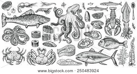 Seafood Vector Illustrations. Hand Drawn Line Sea Fishes, Oysters, Lobster, Squid, Octopus, Crabs, P