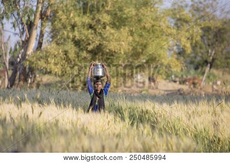 Mandu, India - February 02, 2017 : Indian Girl With A Jug With Water On Her Head Goes Through A Whea