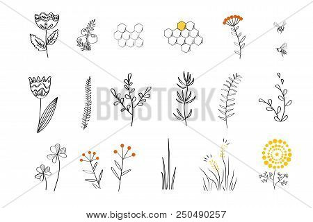 Doodle Plants - Cartoon Nectar Sources For Honey Bees. Vector Hand Drawn Set, Linear Style