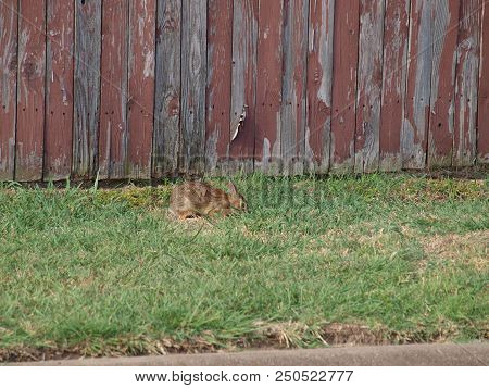 This Bunny Was Near The Roadway On The Outside Of The Fence. He Appears To Be Wild. He Also Kept A W