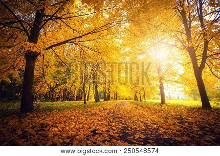 Autumn Scene. Fall Background. Colorful Leaves In Park Everywhere. Trees And Path Covered By Yellow