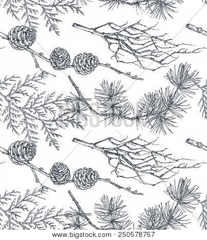 Vector Background With Hand Drawn Conifers Trees In Sketch Style. Seamless Pattern With Plants And B