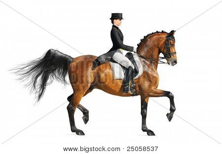 Equestrian sport - dressage (isolated on white) poster
