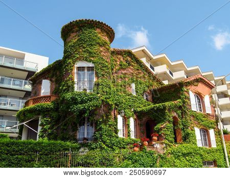 Cannes, France - July 2, 2018: Clambering Plant On The Exterior Wall Of The Old House On The Bouleva