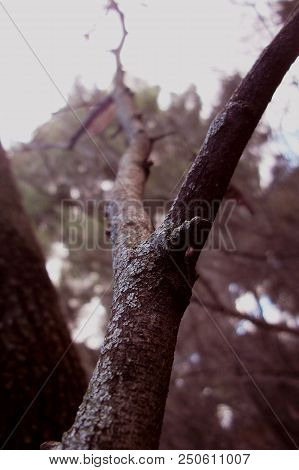 Old Dead Branch Of Trea In A Winter Day