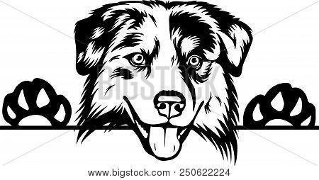 Animal Dog Australian Shepherd 6T6A.eps