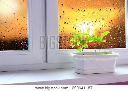 Saplings Of Oaks On Window-sill Of Balcony And View To Evening Sky. Landscape With Sunset Seen From