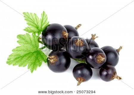 Closeup of fresh black currant on white background.