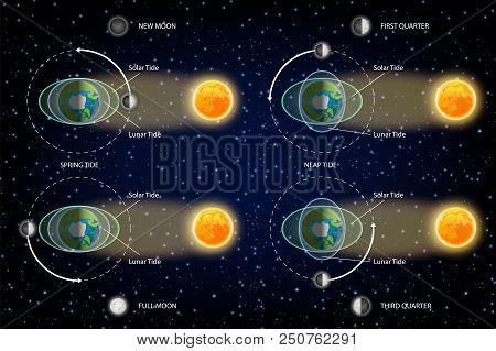 Lunar And Solar Tides Diagram. Vector Illustration. Educational Poster, Scientific Infographic, Pres