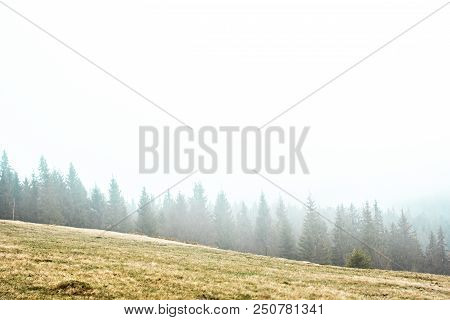 Landscape In The Mountains In The Fog. Carpathian Mountains. The Tops Of Trees Sticking Out Of The F