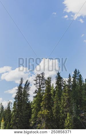 Clouds Float By Behind Tall, Old-growth Pine Trees In A Forest. Summer Day In The Sawtooth National