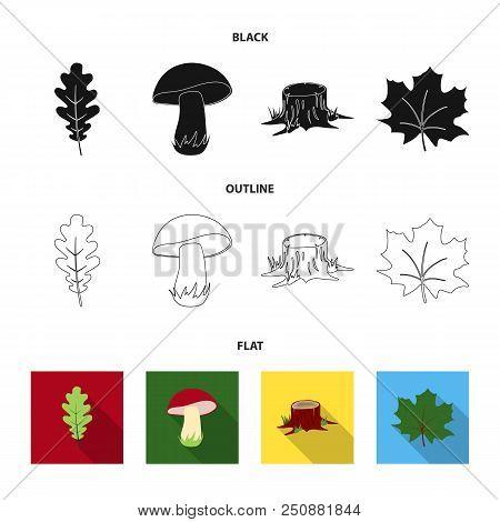 Oak Leaf, Mushroom, Stump, Maple Leaf.forest Set Collection Icons In Black, Flat, Outline Style Vect