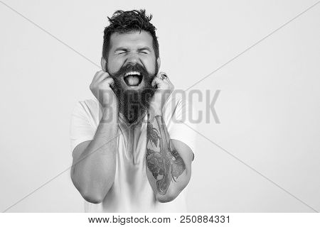 Bearded Man Screaming, Holding His Beard. Studio Portrait Of Bearded Hipster Man. Sexy Male, Long Be