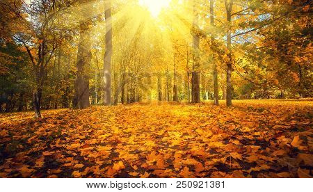 Autumn Landscape. Autumn Nature. Fall Scene. Park Covered By Yellow Foliage. Tranquil Background.