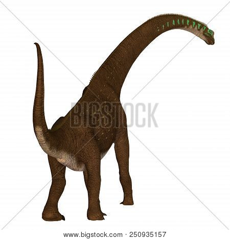 Giraffatitan Dinosaur Tail 3d Illustration - Giraffatitan Was A Herbivorous Sauropod Dinosaur That L