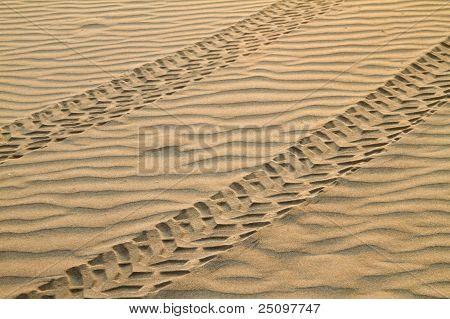ATV Tracks On Sand