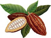 Cocoa beans with green leaves. poster