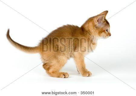 Kitten;