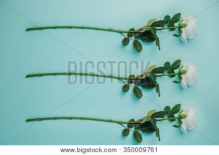 Spring Freshness. Three White Roses With Green Leaves On Blue Background. Beautiful White Roses With