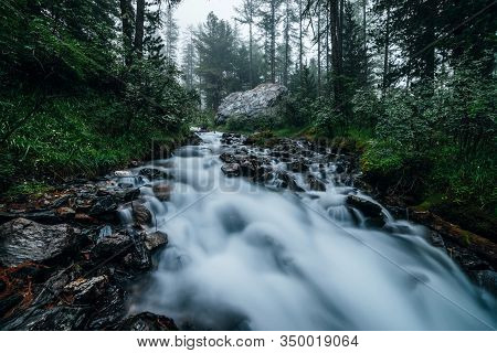 Fast Mountain Creek In Dark Forest. Cascade Stream In Woodland Among Dense Thickets And Coniferous T