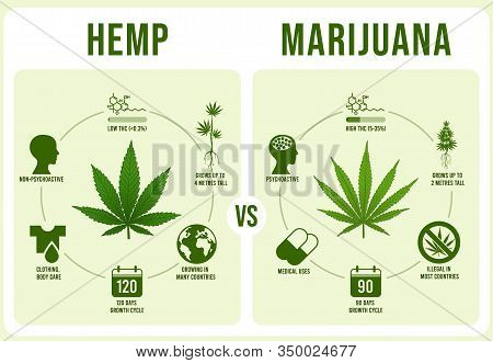 Hemp Vs Marijuana Infographics. Cannabis Leaf, Low And Hight Thc Vector Illustration. Modern Banner