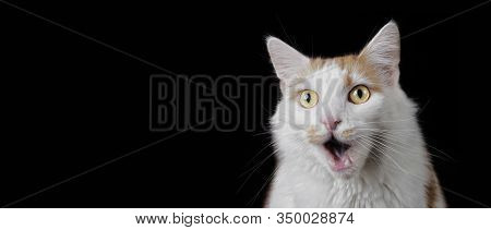 Funny Tabby Cat Looking Surprised With Mouth Open. Panoramic Image With Copyspace For Your Individua
