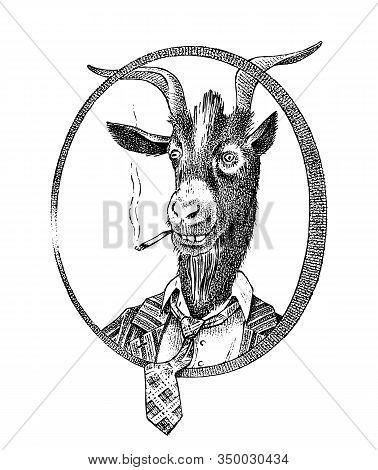 Smoking Goat Student Or Sheep. Hand Drawn Animal Person Portrait. Engraved Monochrome Fashion Sketch