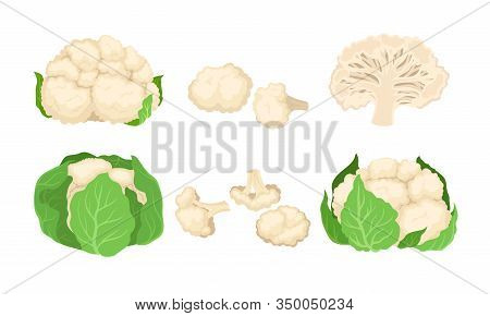 Cauliflower Cabbage With Separated Florets Isolated On White Background Vector Set
