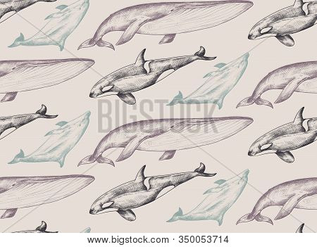 Vector Monochrome Seamless Pattern With Ocean Animals Whale, Dolphin, Orca In Sketch Style.