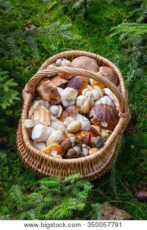 Basket Full Of Edible Mushrooms. Mushroom Hunting From Central Europe, Slovakia.