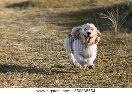 Happy Dog Face. Cute Canine Having Fun Running Off The Lead. Funny Animal Meme Image. Loyal Pet Play