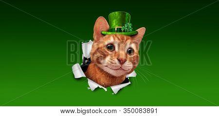 Saint Patricks Day Irish Holiday Cat Wearing A Green Leprechaun Hat With A Shamrock Clover Bursting