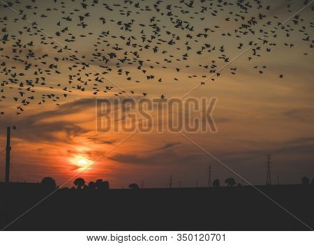 Landscape With Flock Of Birds Flying Over Fields During Sunset