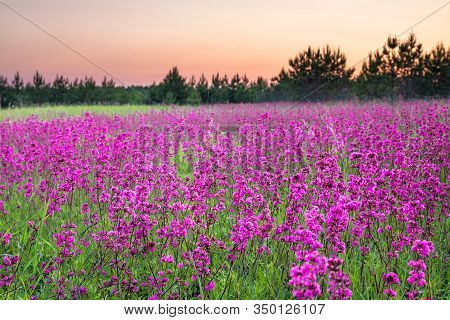 Beautiful Spring Landscape With Flowering Flowers On Meadow And Sunrise. View Of A Blooming Field Wi